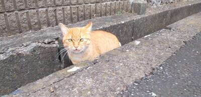 側溝猫.jpg