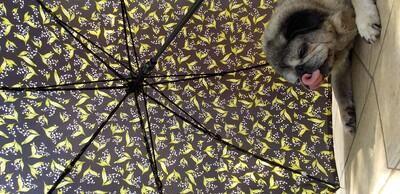 傘ベロ.jpg